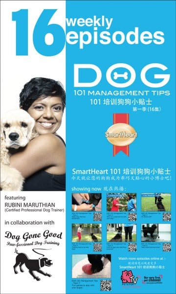 16 Weekly Episodes Dog 101 Management Tips